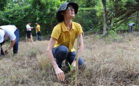 Reforestacion-22junio