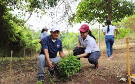 reforestacion-utp-panamaoeste